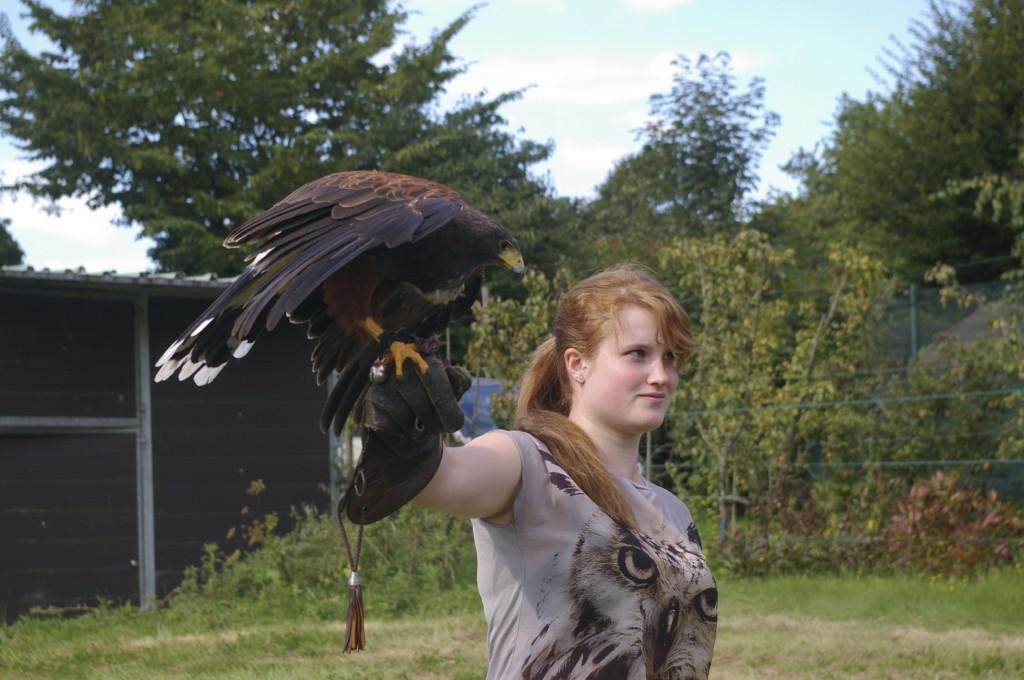 Initiation à la fauconnerie
