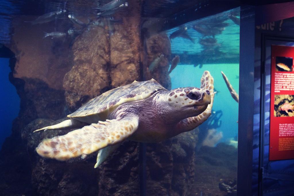 Visite de l'aquarium Nausicaa